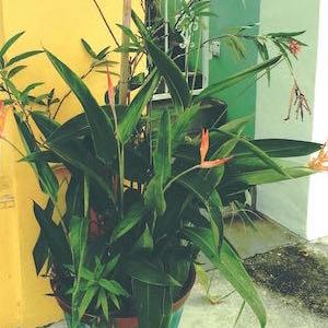 Blumentopf Strelizien gelb türkis grün