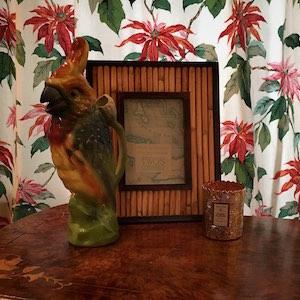 Papagei Bilderrahmen exotisch